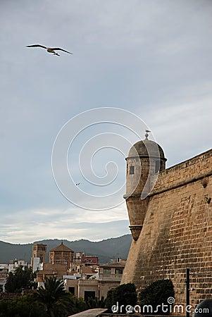 Palma Walls