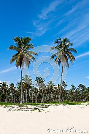 Palmas verdes en una playa blanca de la arena