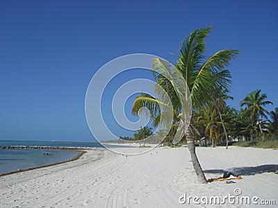 Palme auf Strand