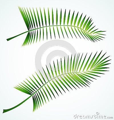 Palme branch