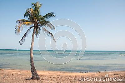Palmeira do paraíso