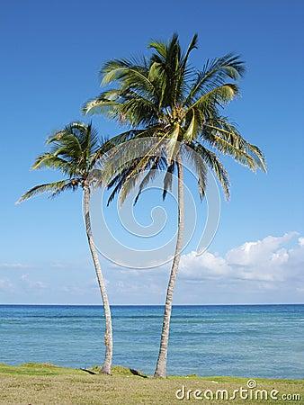 Palmeira e praia