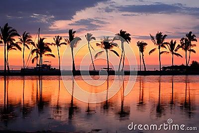 Palmeiras tropicais do por do sol da praia do paraíso