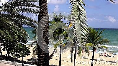 Palmen bij mooi strand van Voet Cityscapes van de Lauderdalev.s. stock video