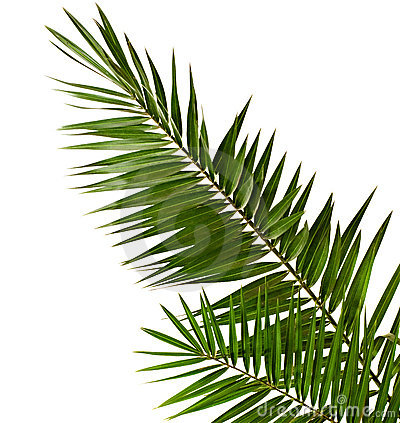 Palmen-Brunch