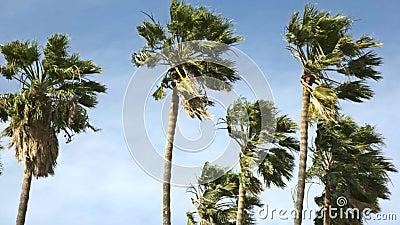 Palmen in de wind stock footage