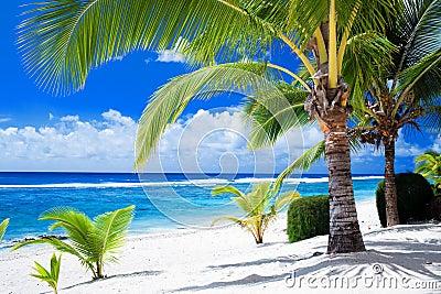 Palmen die verbazende blauwe lagune overzien