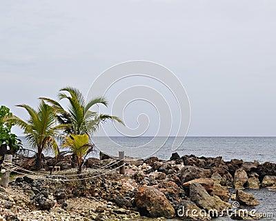 Palmen en rotsachtige oever