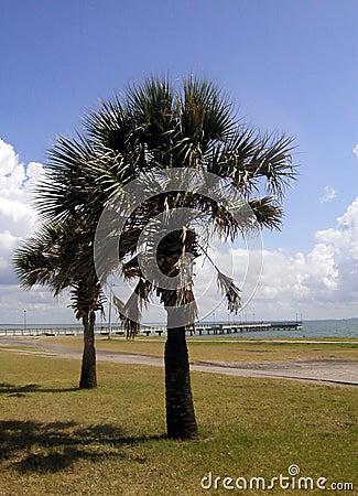 Palmen op de Golf