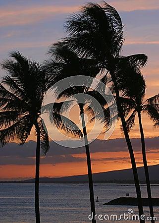 Palmen tijdens een Hawaiiaanse Zonsondergang