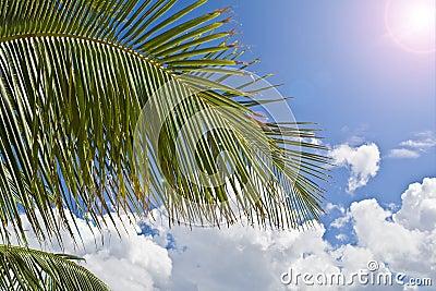 Palmeparadies