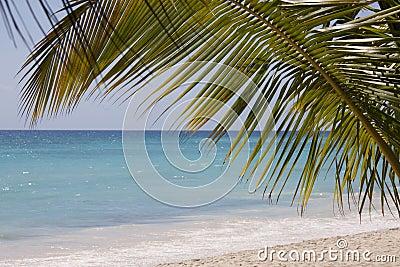 Palmera en la playa tropical