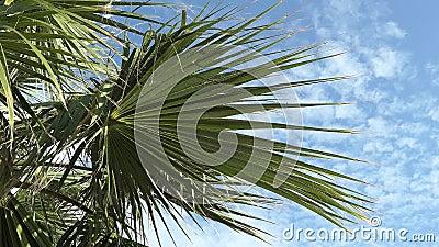Palmeras de la familia botánica Arecaceae en una ligera brisa en un exótico complejo tropical donde relajarse metrajes
