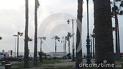 Palmeras en la calle egipcia del viento almacen de video