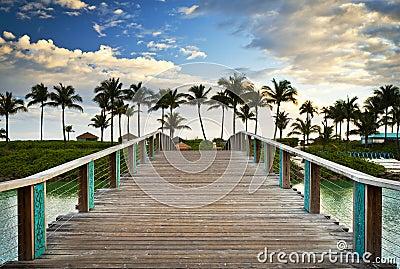 Palmeras tropicales de las vacaciones del paraíso de la playa del océano