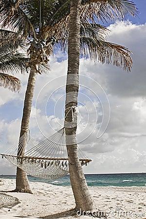 Palmeras Y Hamacas De La Playa Foto De Archivo Imagen