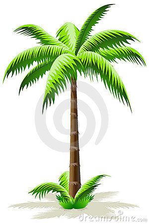 Palmier photos stock image 12907783 - Dessin de palmier ...