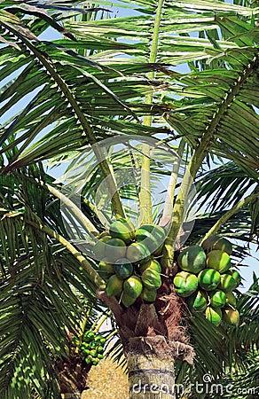 Palmier artificiel image stock image 16981071 - Palmier noix de coco ...
