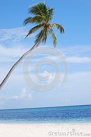 Palmier dans le paradis
