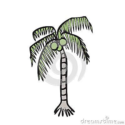 Palmier de noix de coco illustration stock image 39542570 - Palmier noix de coco ...
