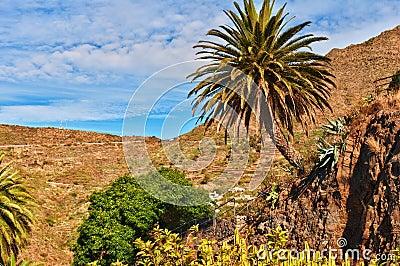 Palmier et cactus.
