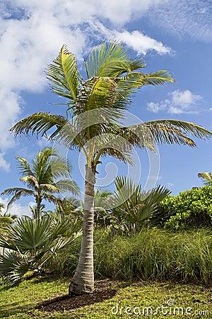 Palmiers dans le paradis