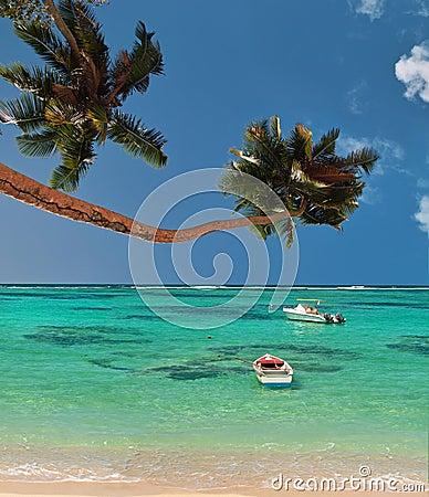 Palmiers et bateaux de lagune de paradis.