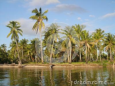 Palmowy raj