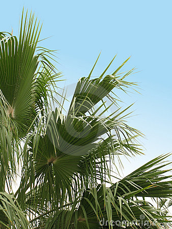 Free Palms Stock Photos - 1837483