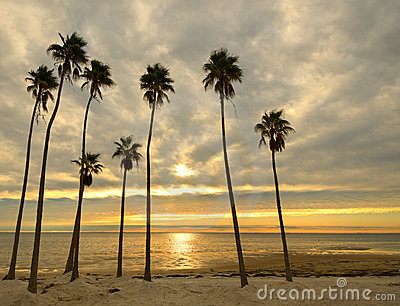 Palms on a Beach
