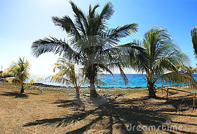 Palms on the Caribbean coast
