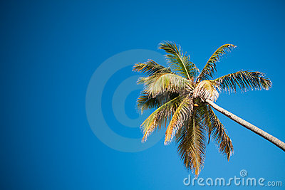 Palms and Caribbean sky