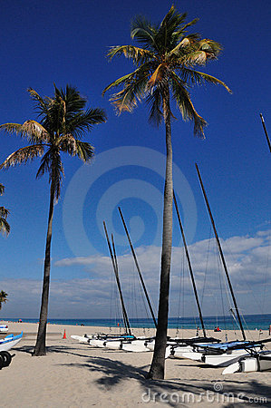 Palms and catamarans