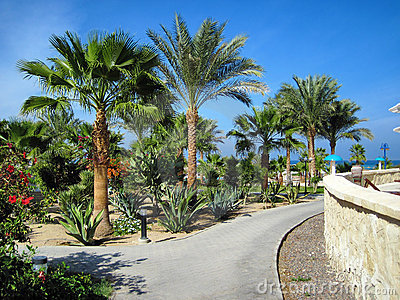 Palms and evergreen plants in Egypt
