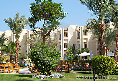 Palms and evergreen plants in hotel