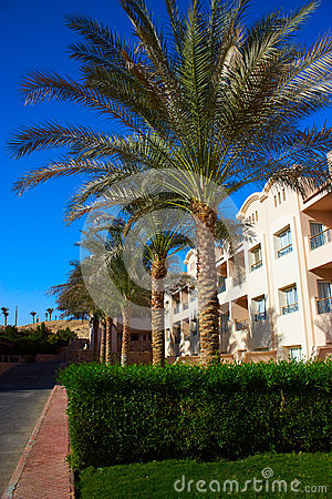 Palms and hotel