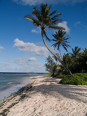Palms on Island beach