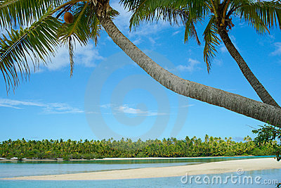 Palms leaning idyllically over waters edge.