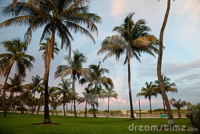 Palms in Miami Beach before sunset