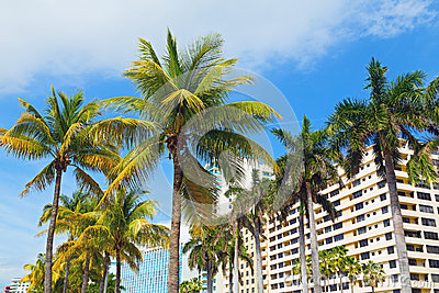 Palms and modern buildings of Miami Beach.