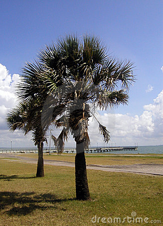 Free Palms On The Gulf Royalty Free Stock Photo - 15495
