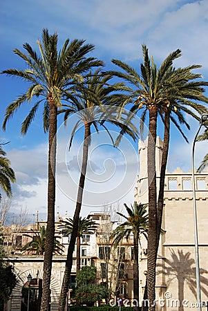 Palms in Palma de Majorca