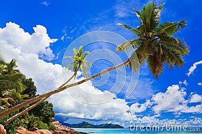 Palms on tropical beach