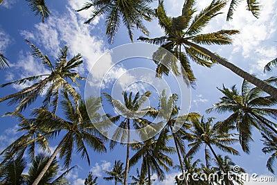 Palms under sky