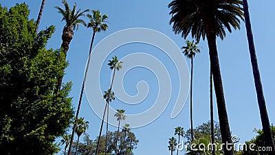 Palmtr?dgr?nd - som ?r typisk f?r Beverly Hills - loppfotografi lager videofilmer