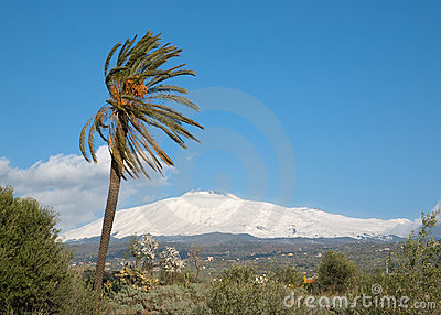 Palmtree And Volcano Etna