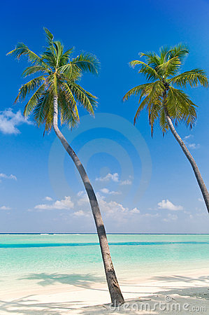 Palmtrees on a tropical beach