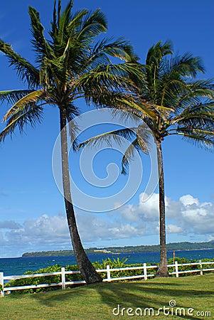 PalmTreesOn Hawaii
