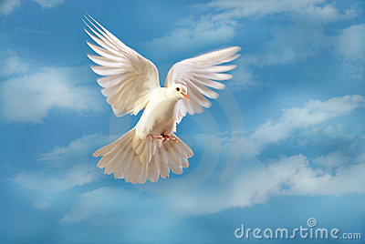 paloma blanca que vuela aislada en azul foto de archivo imagen 7186100. Black Bedroom Furniture Sets. Home Design Ideas