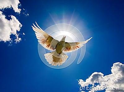 Paloma en el aire con las alas abiertas de par en par